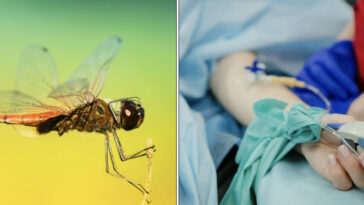 A mosquito disease, known as the 'West Nile Virus' has killed at least 19 people in the US this year across the entire country.
