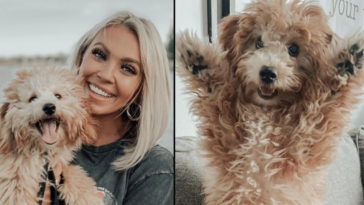 An influencer has claimed her husband 'shot and killed her dog instead of taking it to the vet after it was injured in a hit and run incident'.
